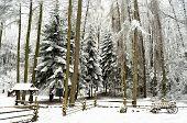 Snowbound winter forest with elements of wooden decoration - shed, cart and fence. Skansen Shevchenkivskyi Hai, Lviv Ukraine. poster