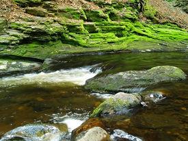 Algea,Rocks And Water