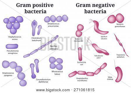 Hand Drawn Microbiology Set. Arrangements Of Bacterial Microorganism. Gram Positive And Gram Negativ