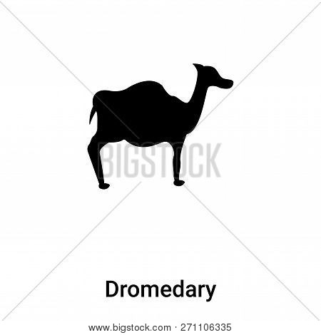 Dromedary Icon In Trendy Design Style. Dromedary Icon Isolated On White Background. Dromedary Vector