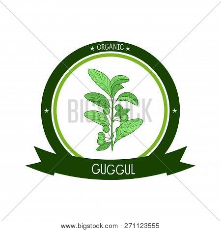Guggul. Plant. Branch, Leaves, Fruit. Sketch. Color. On A White Background. Logo, Sticker, Emblem