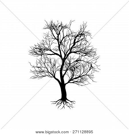 Black Dry Tree Silhouette On White Background. Tall Tree Vector Silhouette Isolated. Tropical Tree.
