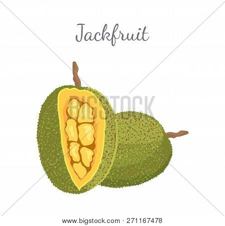 Jackfruit Exotic Juicy Stone Fruit Vector Whole And Cut Isolated. Jack Tree, Fenne, Jakfruit Or Jak.