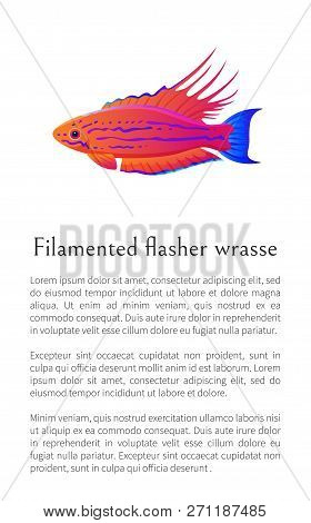 Filamented Flasher Wrasse Fish On White Background, Vector Illustration Of Exceptional Marine Occupa