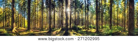 Panoramic Autumn Forest Landscape. Fall Nature Background