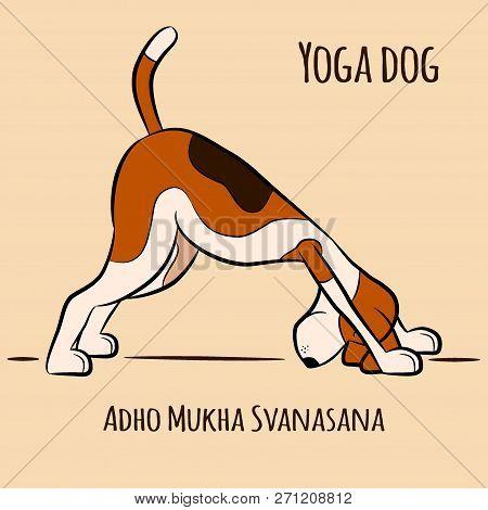 Dog Shows Yoga Pose Adho Mukha Svanasana