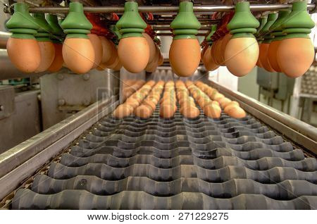 Egg Factory On Selecting Process And Grading Production Line With Fresh Eggs Are Prepare For Package