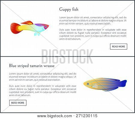 Cuppy Fish And Blue Striped Tamarin Wrasse Posters With Headlines Set. Fauna Species Of Sea Or Ocean