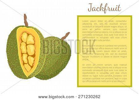 Jackfruit Exotic Juicy Stone Fruit Whole And Cut Vector Poster Frame. Jack Tree, Fenne, Jakfruit Or