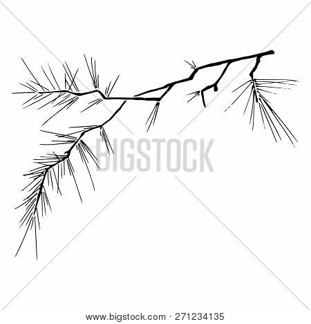 Christmas Tree Branch. Vector Illustration Of A Pine Branch. Christmas Tree Branch Hand Drawn.