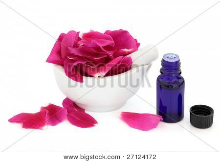 Rose flower petals in a porcelain mortar with pestle isolated over white background. Rosa rugosa.