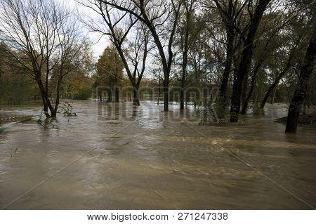 Flooded Land And Trees Near River Lambro Milano