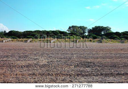 Mediterranean Vegetation With Sand And Shrubs Called Mediterranean Macchia