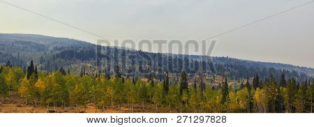 Late Summer Early Fall Panorama Forest Views Hiking, Biking, Horseback Trails Through Trees Along Hi