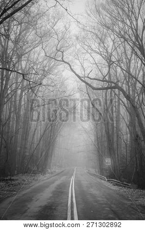 Foggy road into the autumn forest
