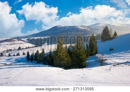 Spruce Woodlot On A Snowy Slope. Lovely Winter Scenery In Mountains. Beautiful And Bright Weather In
