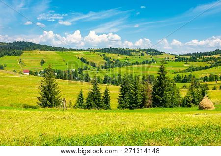 Grassy Rural Hills In Mountains. Wonderful Summer Countryside. Spruce Trees On The Green Meadow