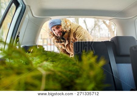 Bearded Man Unloading Christmas Tree Out Of Trunk Of His Car, Inside View. Hipster Gets Fir Tree Fro