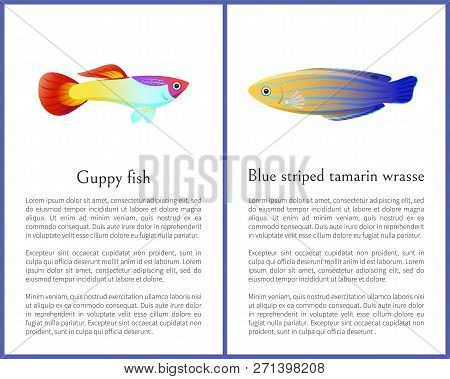Guppy Fish And Blue Striped Tamarin Wrasse Icons. Freshwater Aquarium Pets Silhouette Icon On Blank