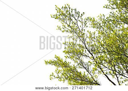 Isolate Of Tree Branch Or Stick With White Background.