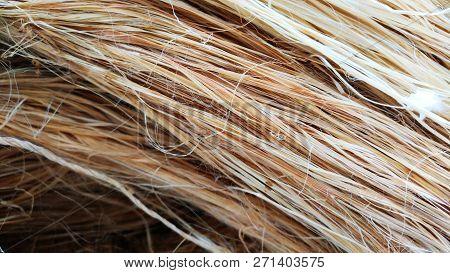 Group Of Hemp Rope Fiber Texture Pattern Background.
