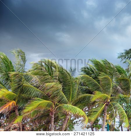 Group of close up tall palm trees over cloudy sky in Phuket, Thailand