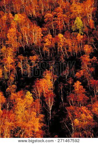 Autumn cliff face near the Adirondack hugh peaks. poster