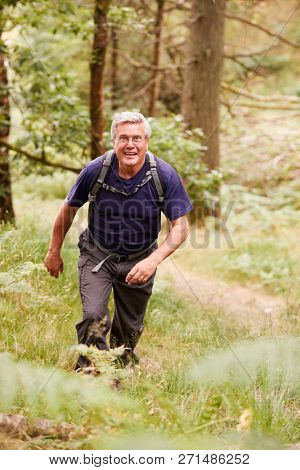 Middle aged man with a backpack hiking in a forest looking at camera, elevated front view, full length