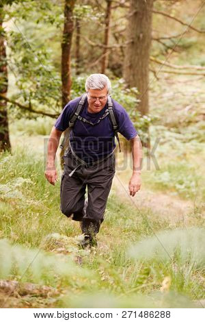 Middle aged man with a backpack hiking in a forest, elevated front view, full length