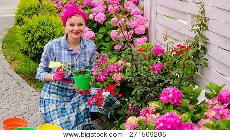 Plant Care And Gardening. Happy Woman Gardener Plant Flowers. Woman Care And Grow Hydrangea Flowers