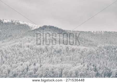 Hills With Snowy Forest. Winter Mountains Landscape