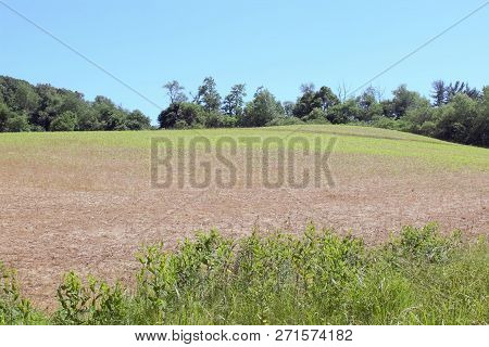 Blue sky, tree line, large field and tall grasses
