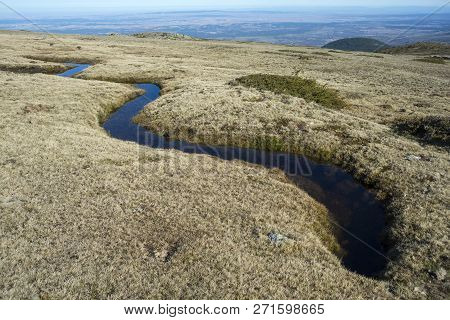 Alpine Grasslands Of Fescue (festuca Indigesta) Located Between The Pico Del Nevero (snowfield Peak;