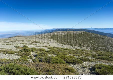 Padded Brushwood (cytisus Oromediterraneus And Juniperus Communis) Located Between The Pico Del Neve