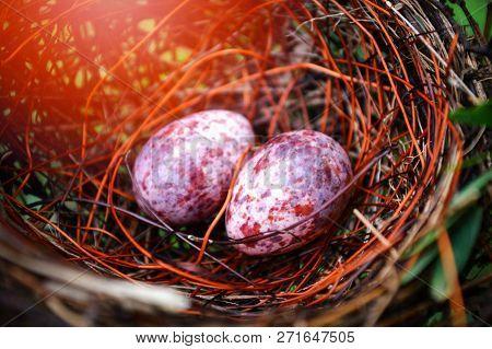 Nest Egg / Eggs Of Birds Nested In Natural Forest