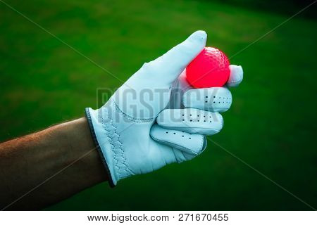 A Hand Of Golfer With A Glove And Red Ball, Close Up. Green Golf Courses On The Background.