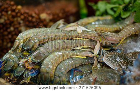 Fresh Mantis Shrimp Thai Street Food Display Stomatopods Background