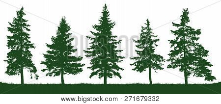Forest Fir Trees Silhouette. Christmas Tree. Coniferous Green Spruce. Vector On White Background, Is