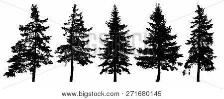 Forest Trees Silhouette. Isolated Vector Set. Christmas Tree, Cedar, Fir-tree, Pine, Pine-tree, Scot