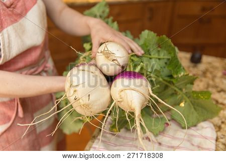 Woman In Apron Holding Large, Healthy Turnips Pulled From A Home Garden.