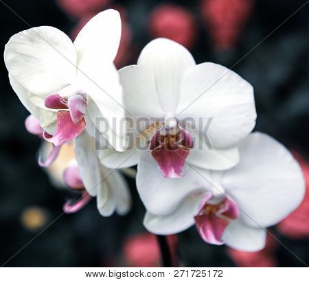 Beautiful Orchid In A Flower Shop Stock Photos