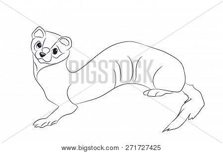 Vector Illustration Marten Line, Vector, White Background