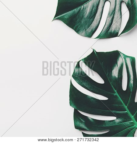 Monstera Leaves On White Background. View From Above. Monstera Background. Summer Nature Spa Fashion