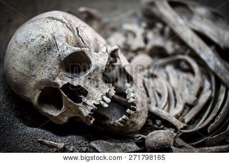 Human Death Skeleton Bones And Skull