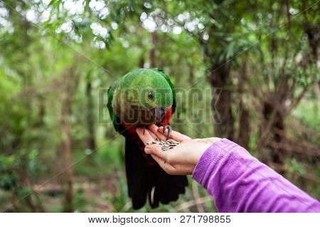 Beautiful Parrot Sitting On Female Hand And Eating
