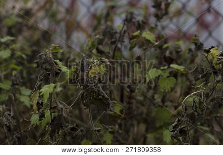A Photo Of Withering Wilting Fading Fall Dark Plants Background