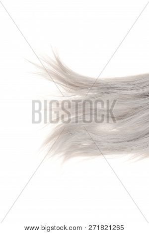 Closeup Grey Weft Of Hair Isolated On White