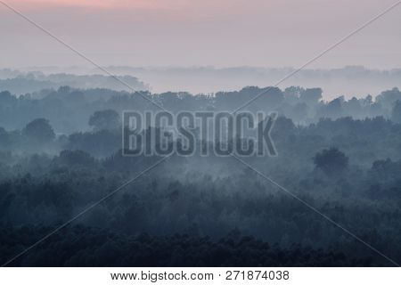 Mystical View On Forest Under Haze At Early Morning. Eerie Mist Among Layers From Tree Silhouettes I
