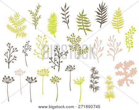 Willow And Palm Tree Branches, Fern Twigs, Lichen Moss, Mistletoe, Savory Grass Herbs, Dandelion Flo
