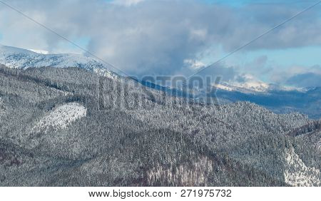 Picturesque Winter Morning Mountains View From Skupova Mountain Alpine Slope. Verkhovyna District, U